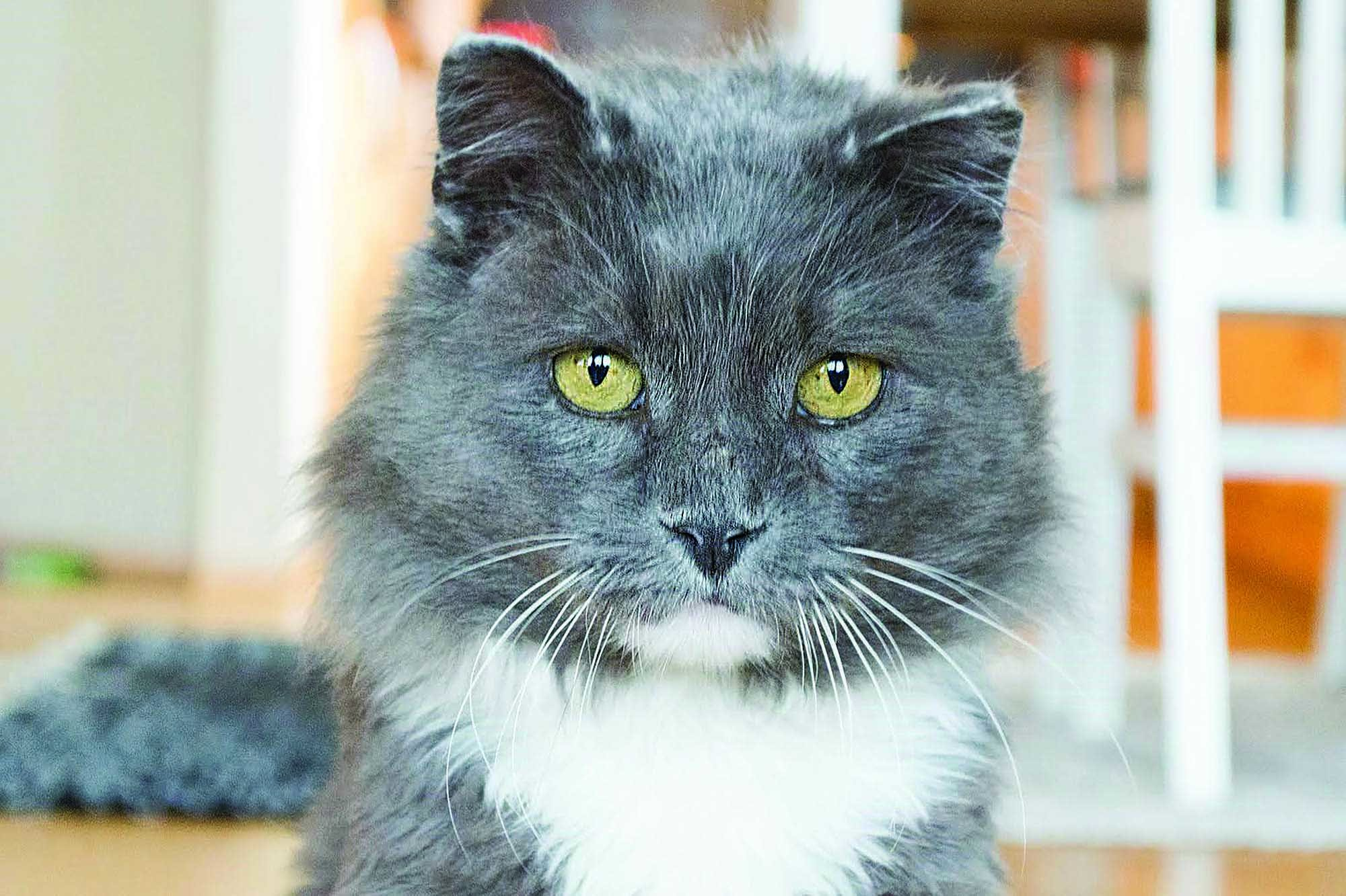 Katten Otto