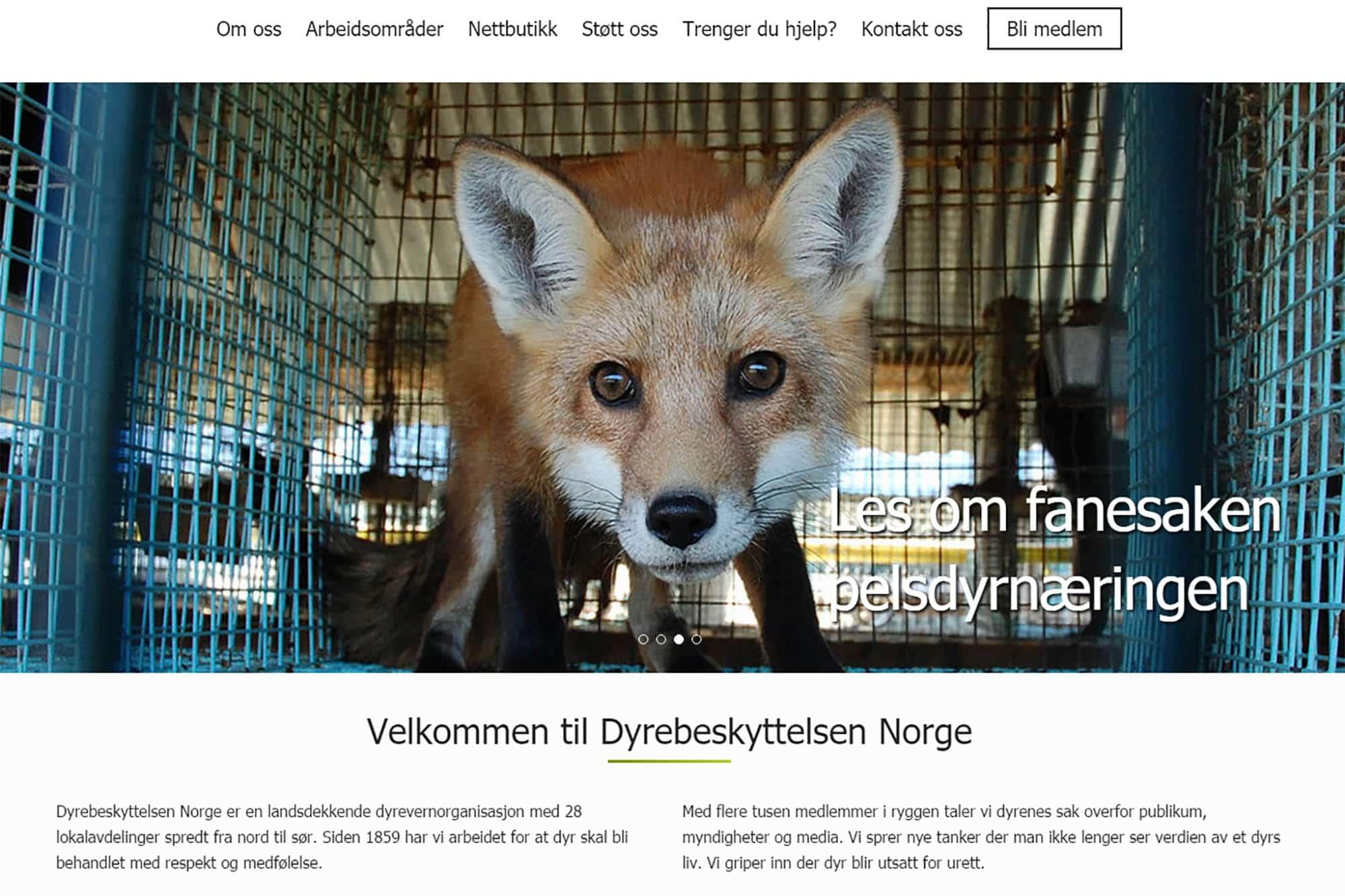 Dyrebeskyttelsen Norge nye sider