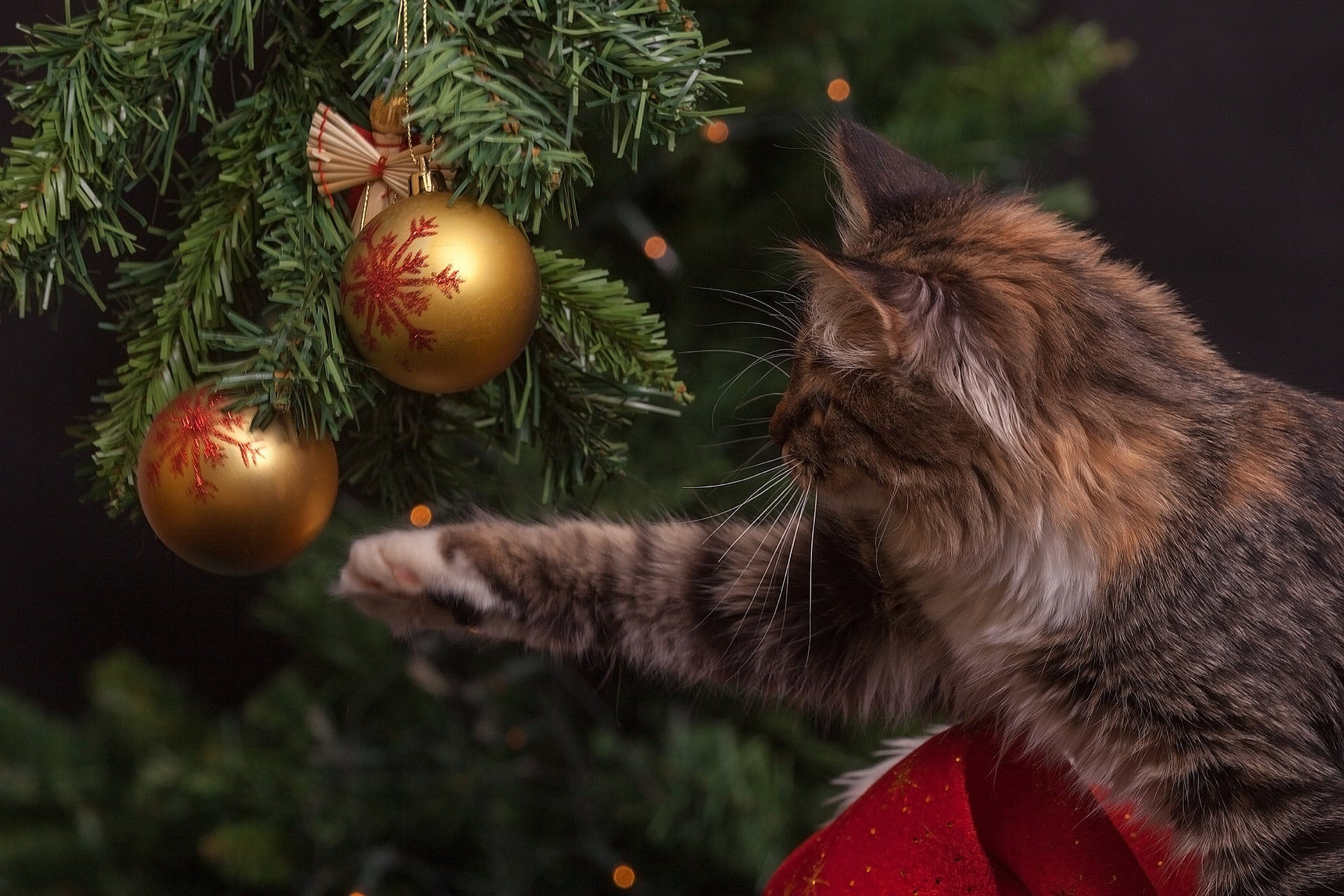 Dyrevennlig jul