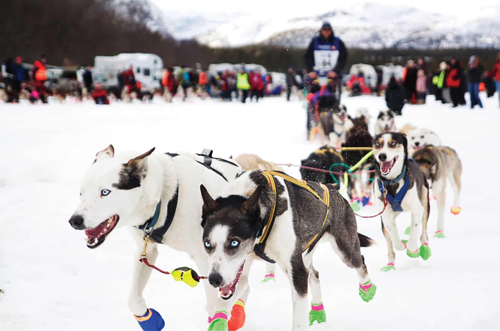 Sledeløp med hunder, foto: Pixabay.com