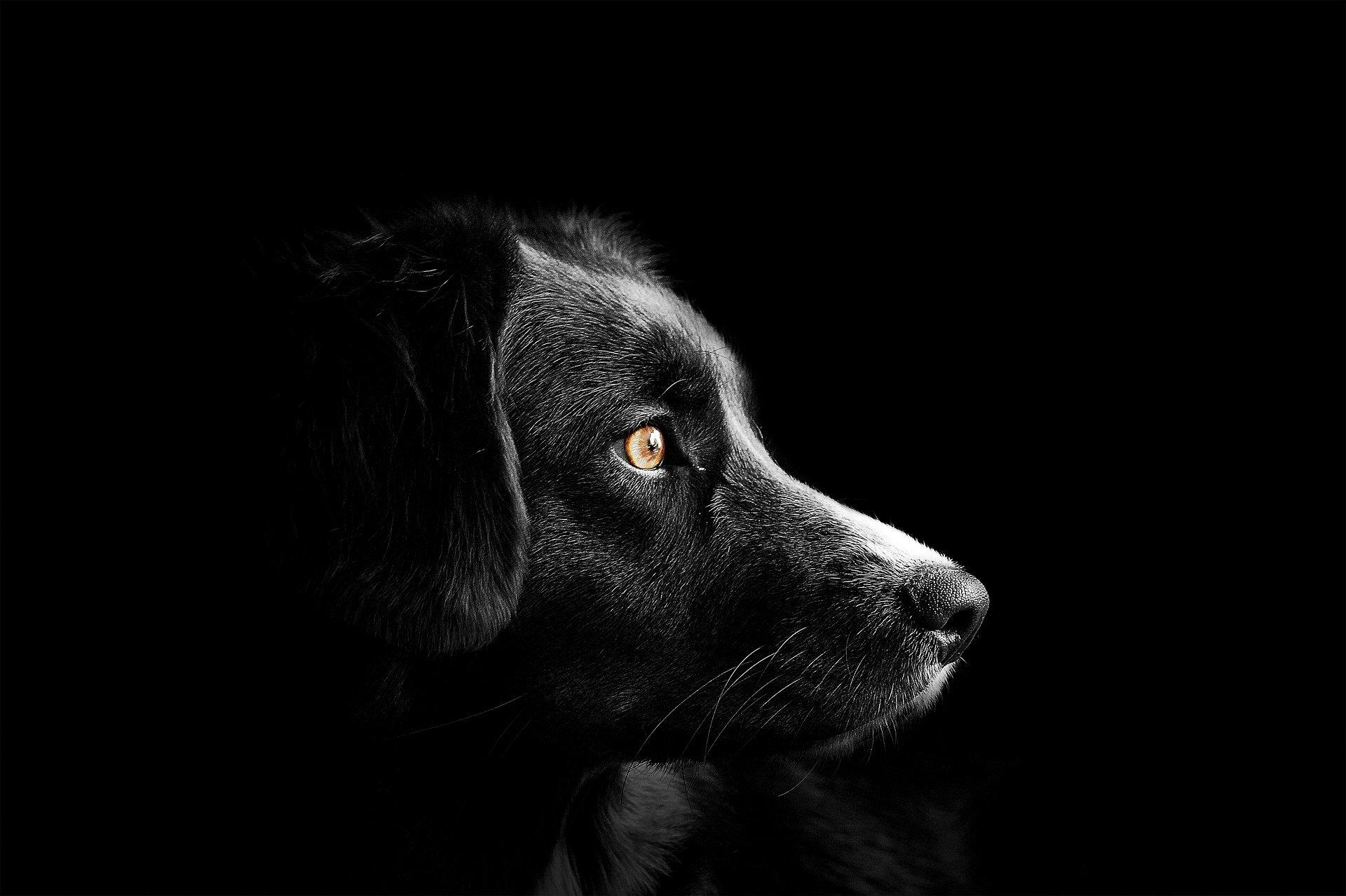 Bli med å endre hundeloven! Foto: Pixabay