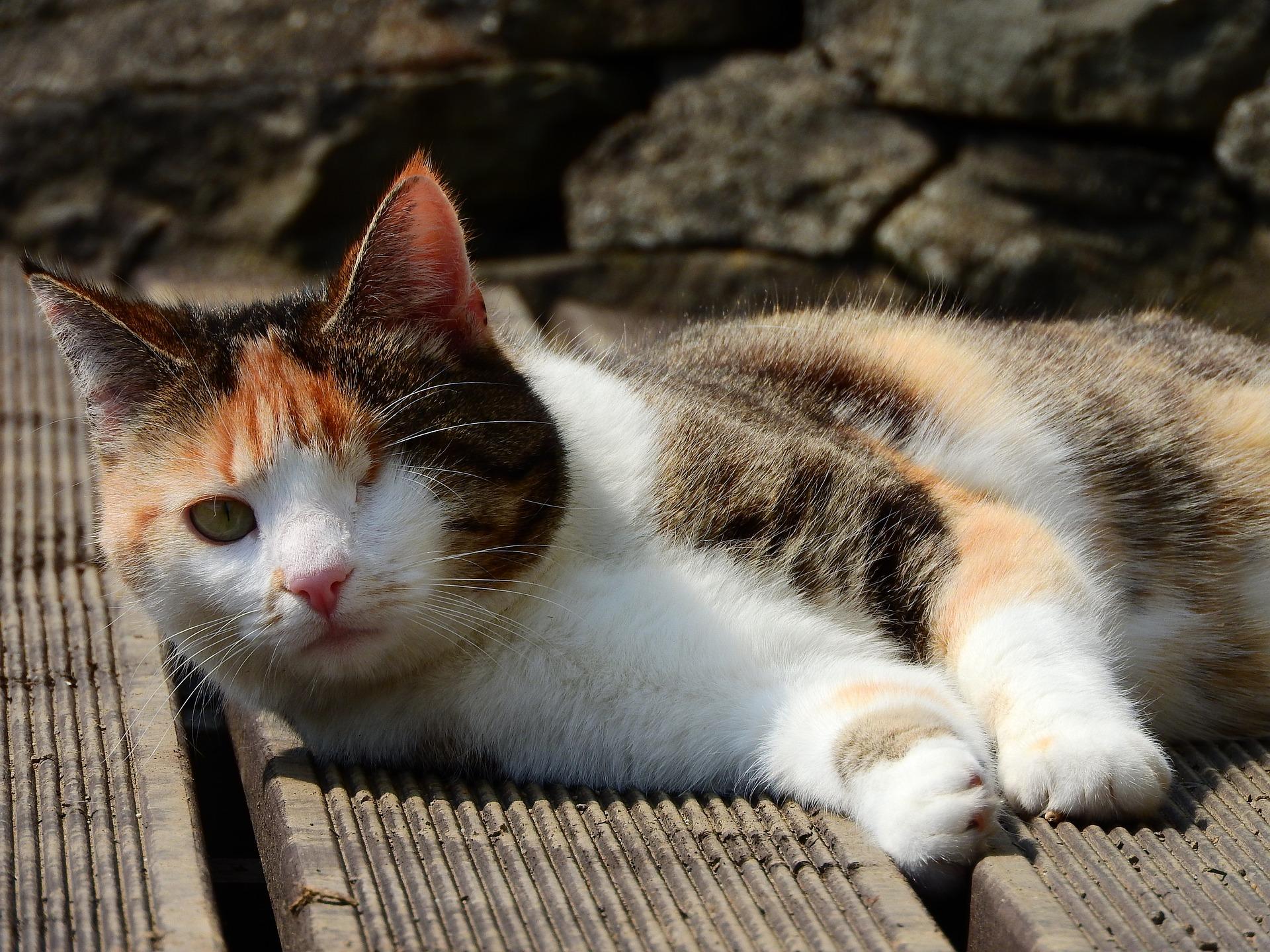 Illustrasjonsbilde katt med kun ett øye. Foto Pixabay.