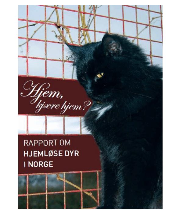 Forside rapport Hjem, kjære hjem - Dyr uten hjem (2009)