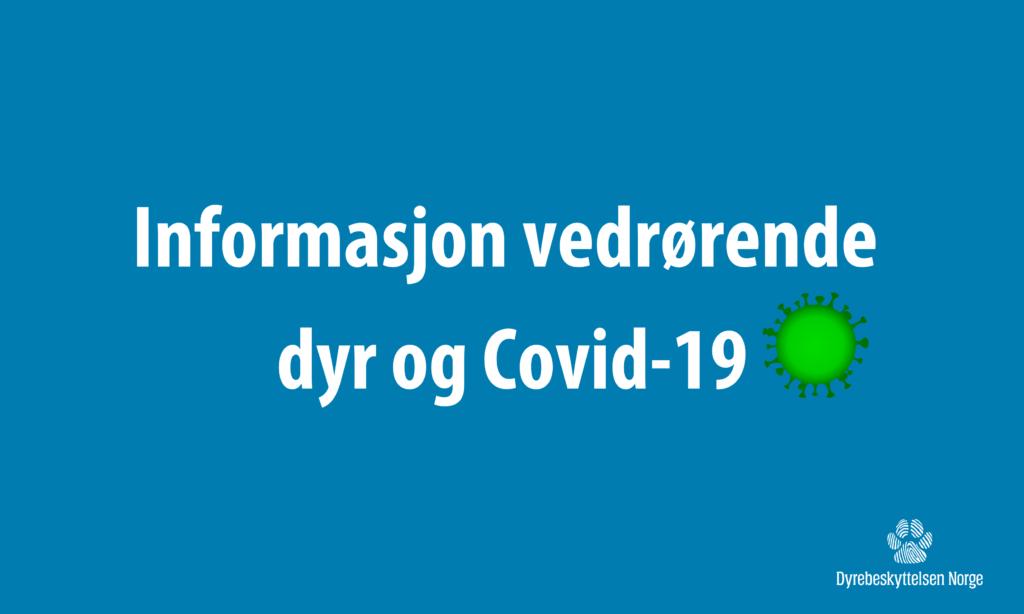 Informasjon vedrørende dyr og Covid-19