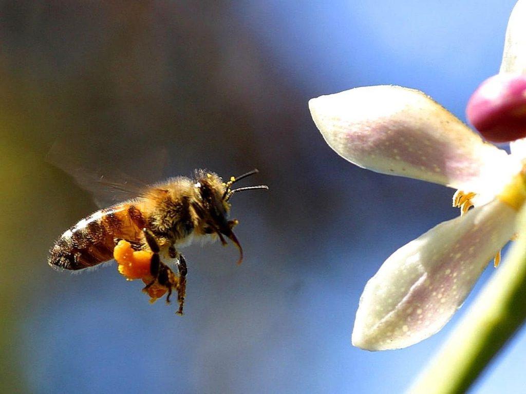 Bie og blomst. Foto: Pixabay