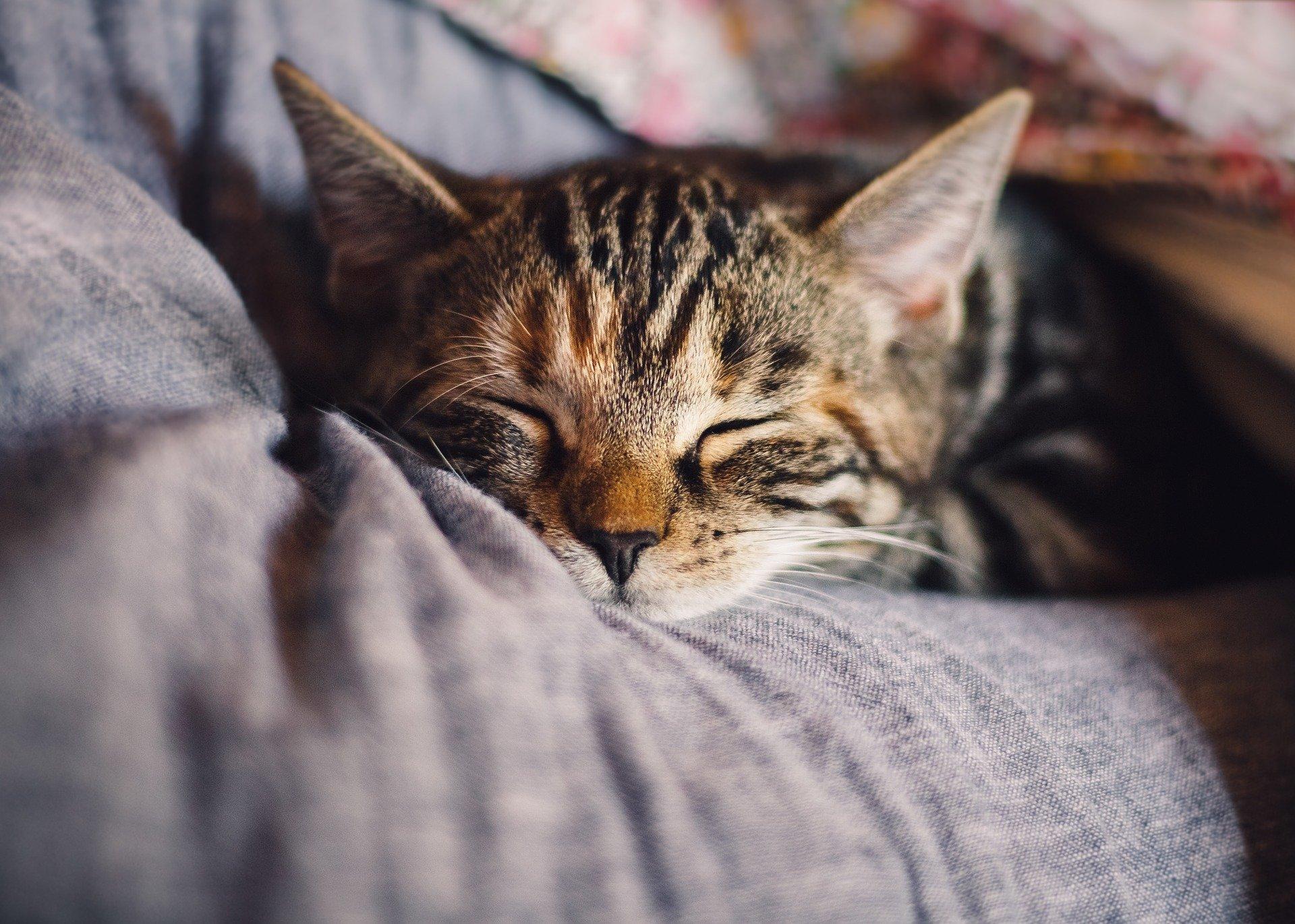 Katt på fanget som får kos. Foto: Pixabay.