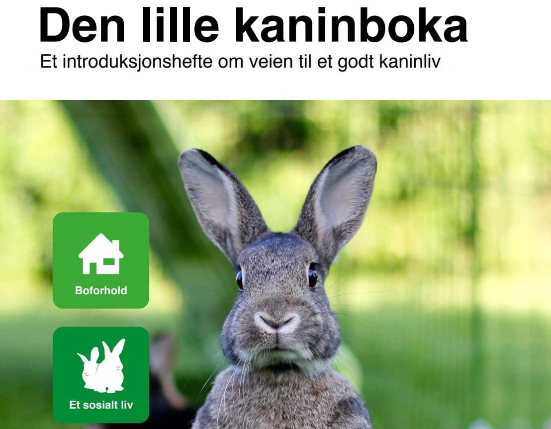 Toppbilde Den lille kaninboka