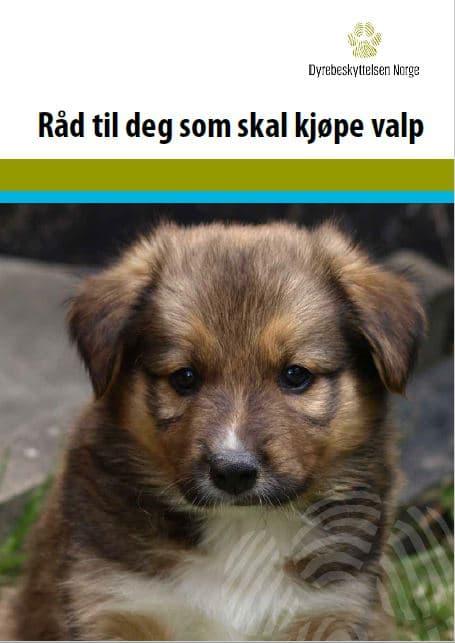 Forside brosjyre Råd til deg som skal kjøpe hund