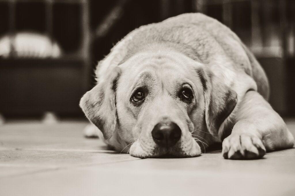 Illustrasjonsbilde av hund. Foto: Pixabay.