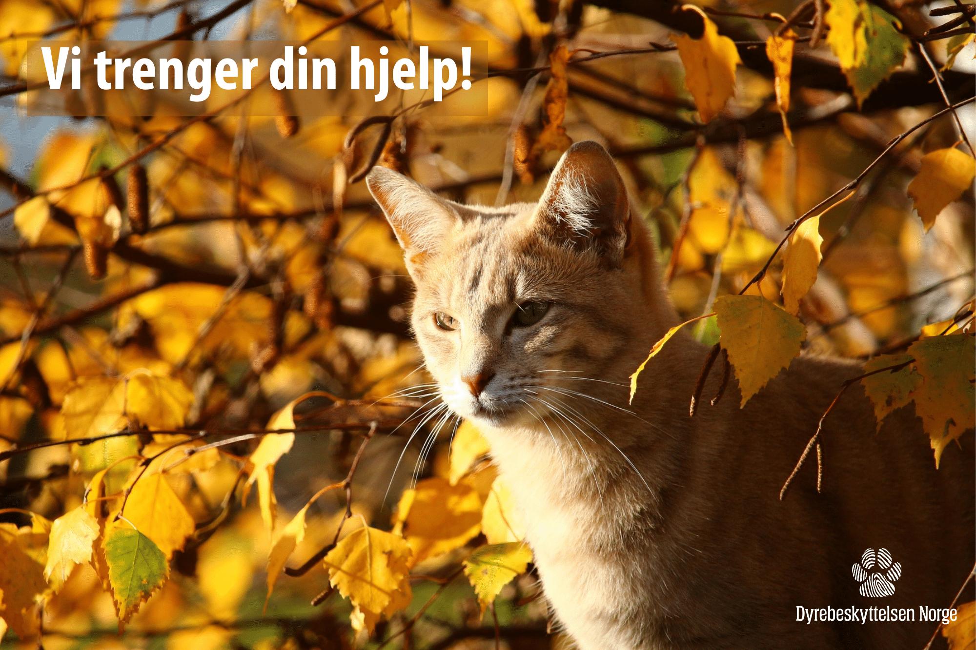 Katt i høstsola. Foto: Pixabay.com