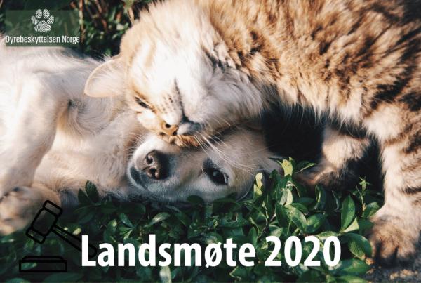 landsmøte 2020. Foto: Pixabay.