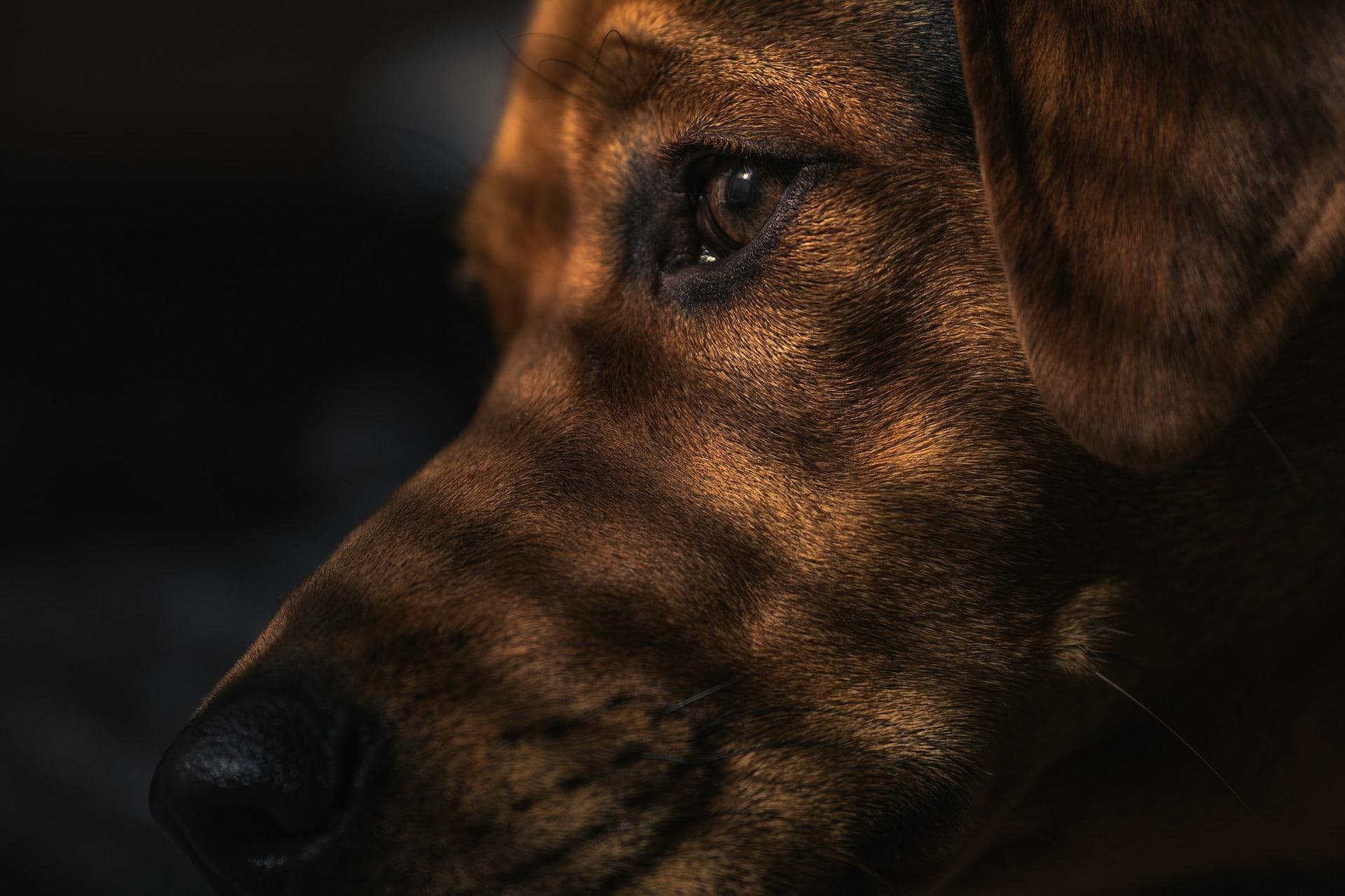 Illustrasjonsbilde hund. Foto: Pixabay