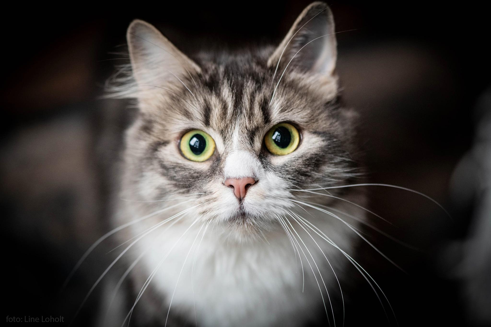 Bilde av katt. Foto: SandefjordLarvik - Line Loholt