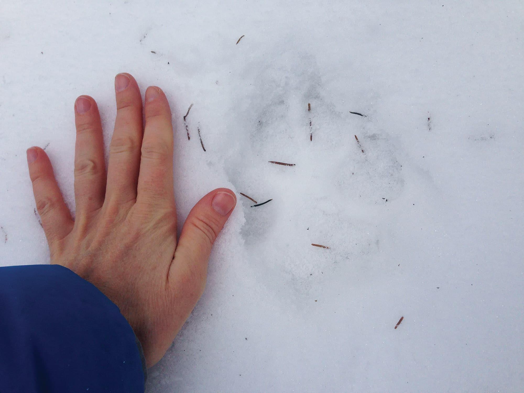 I ulvens spor i østmarka