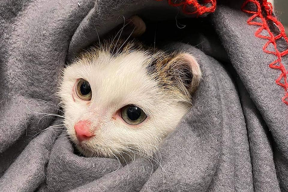 Bilde av dumpet kattunge fra Dyrebeskyttelsen Norge Sør-Trøndelag