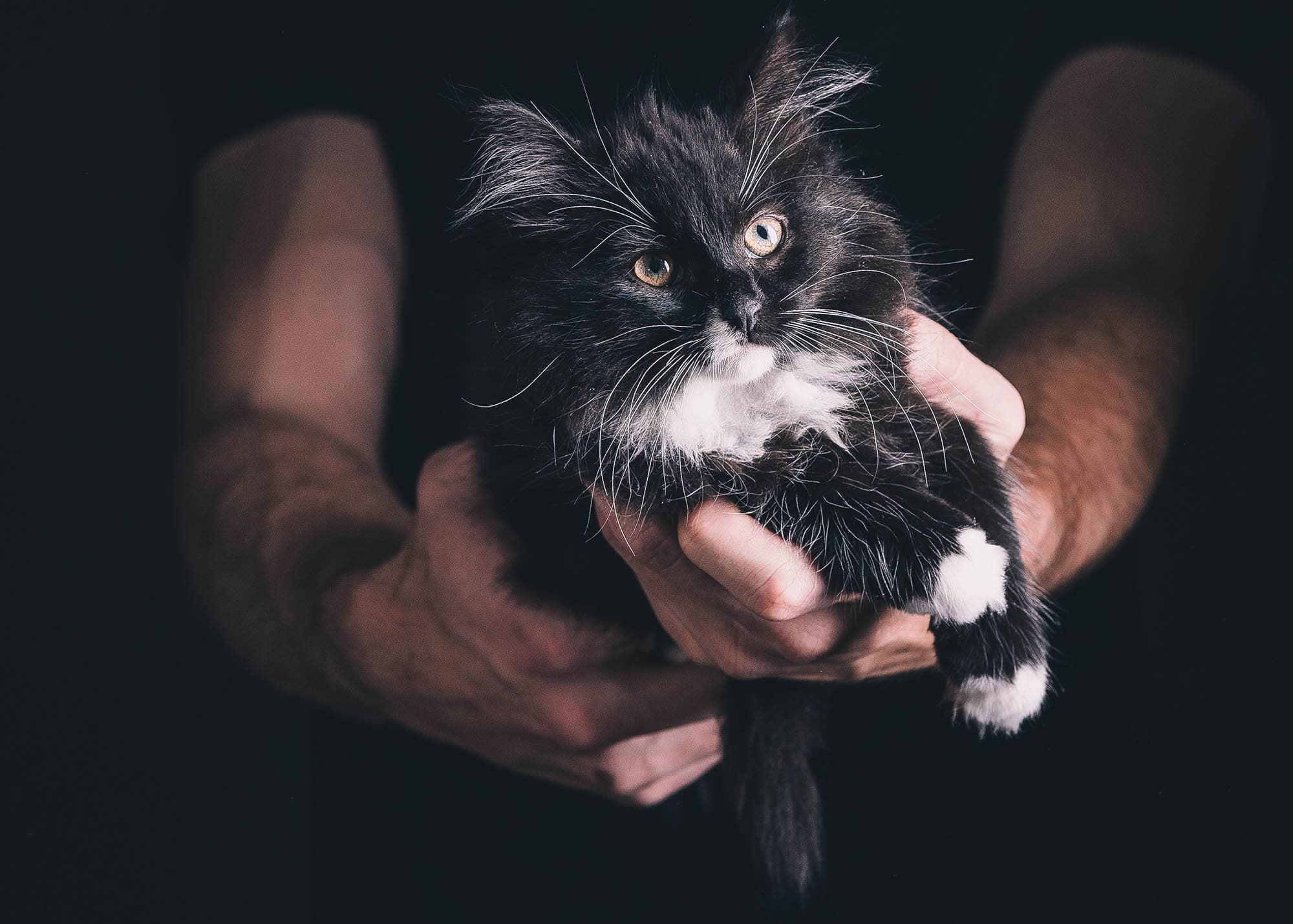 Kattunge som ble funnet i et vedskjul og reddet inn sammen med resten av kullet sitt av Dyrebeskyttelsen Norge Nord-Trøndelag. Foto: Camilla Hattrem