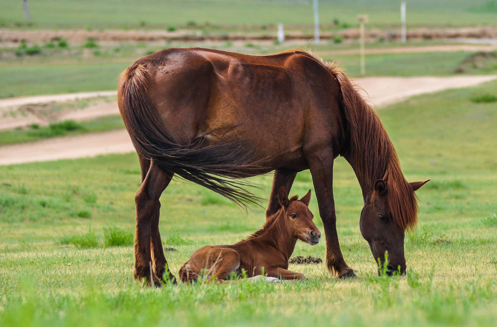 Hest med føll. Foto: Pixabay