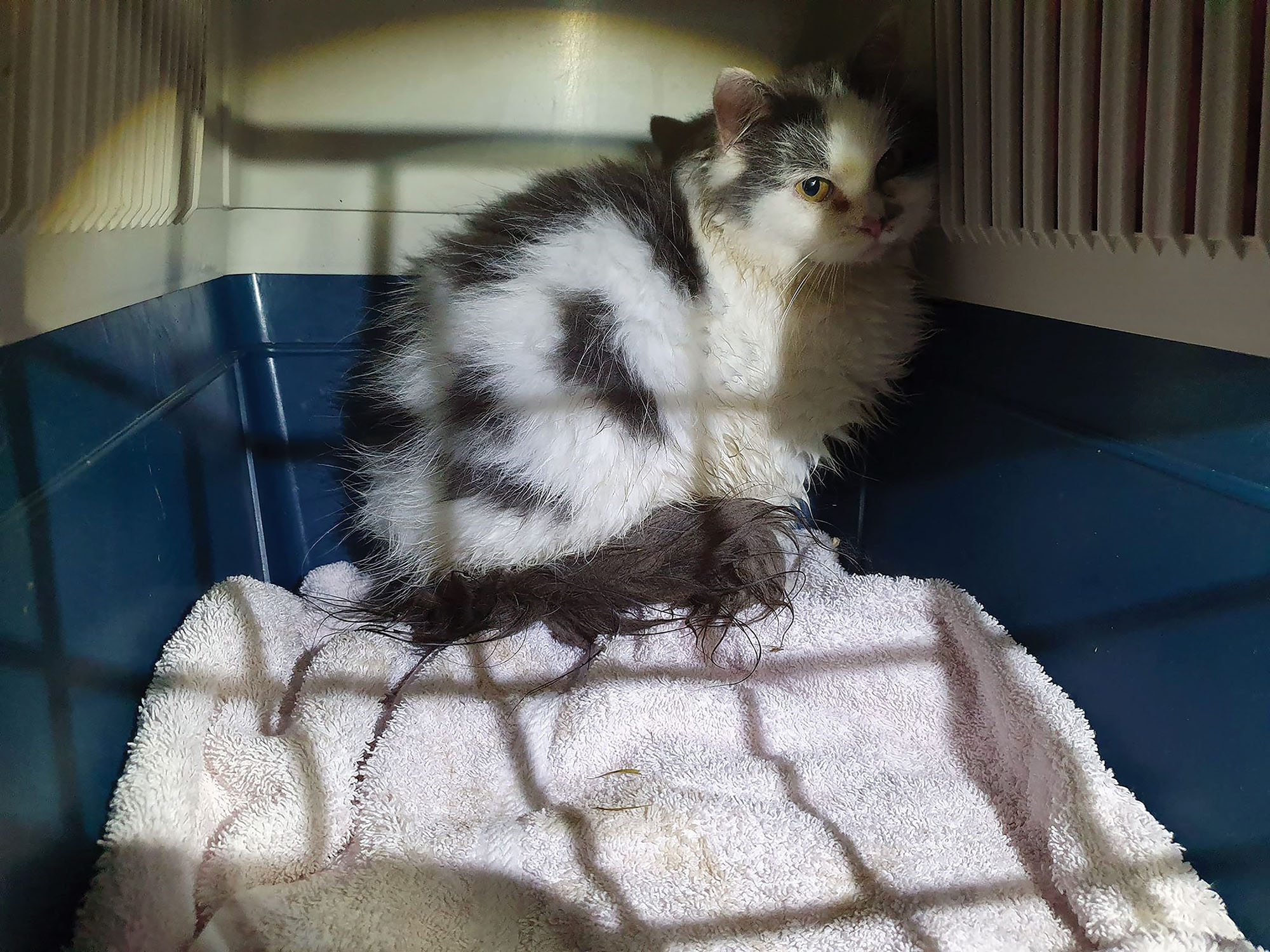Katten Tove-Michelle ble reddet inn av vår lokalavdeling i Tromsø. Bildet er tatt ved inntak. Foto: Dyrebeskyttelsen Norge Tromsø.